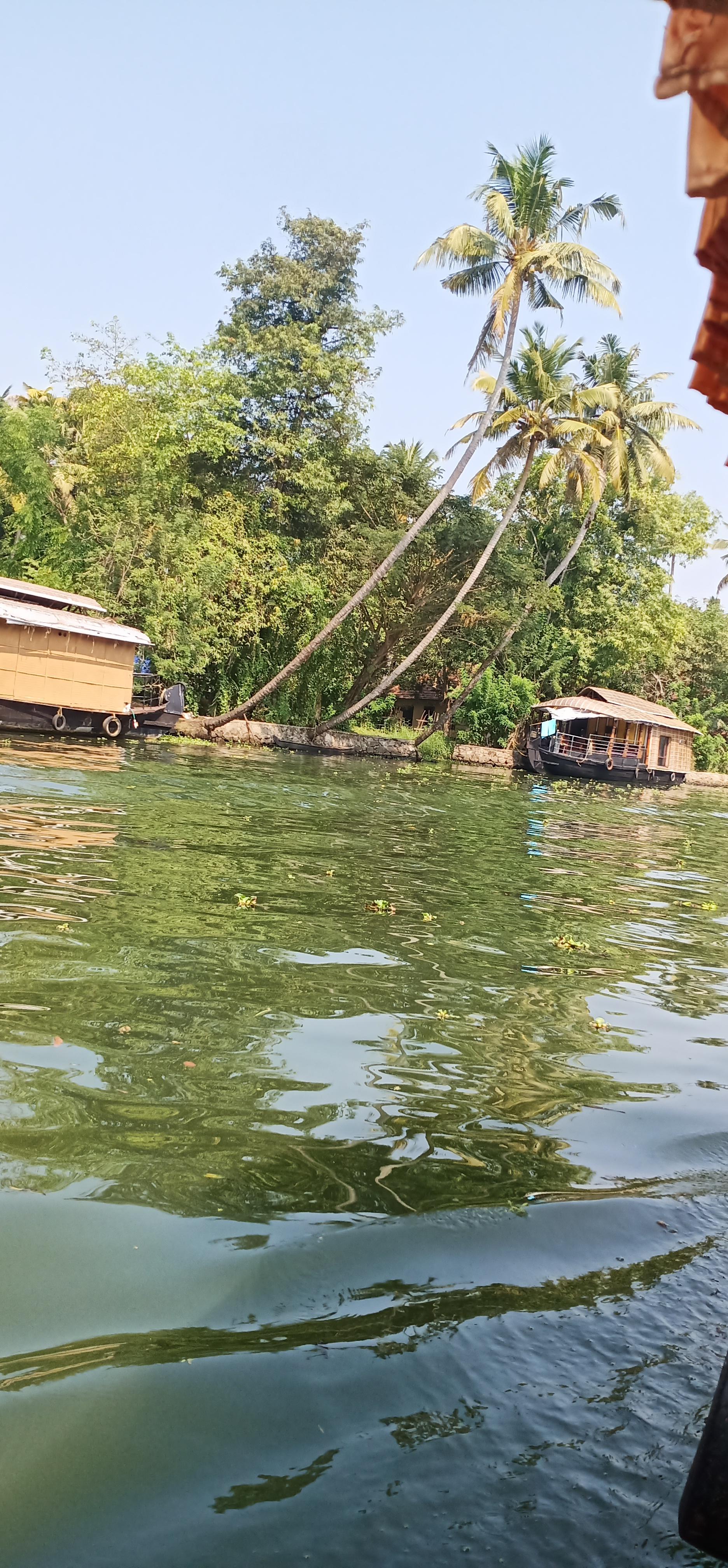 Allapuzha_kerala_backwaters_houseboat_greenwater